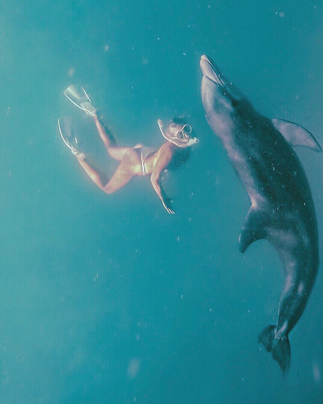 Saint John Swimming with Dolphins Caribbean