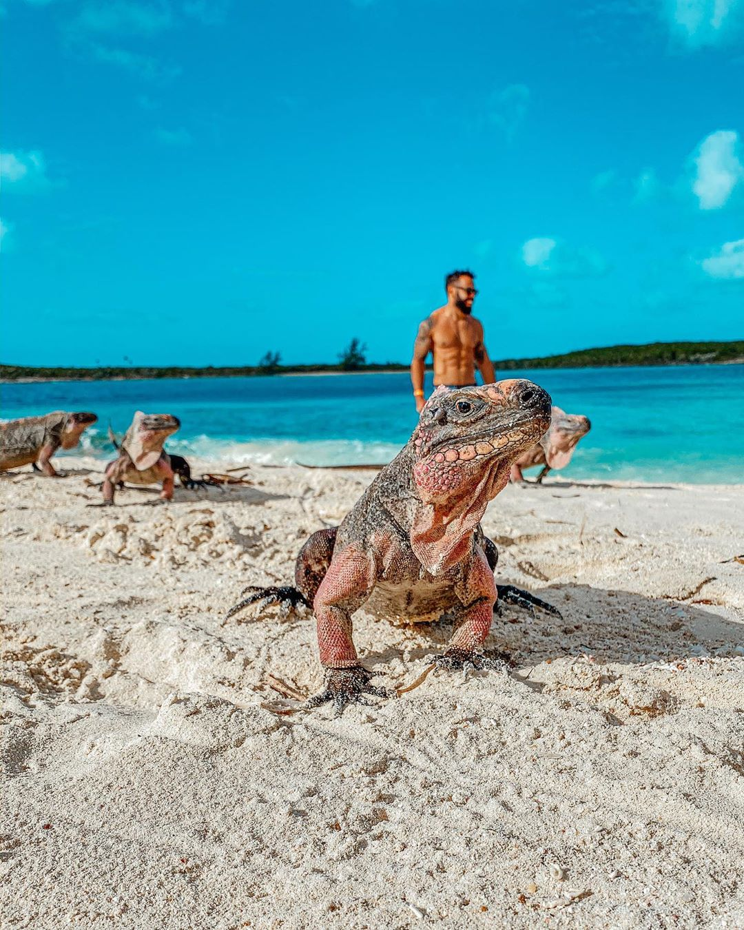 One Week Itinerary in the Exumas - Iguanas
