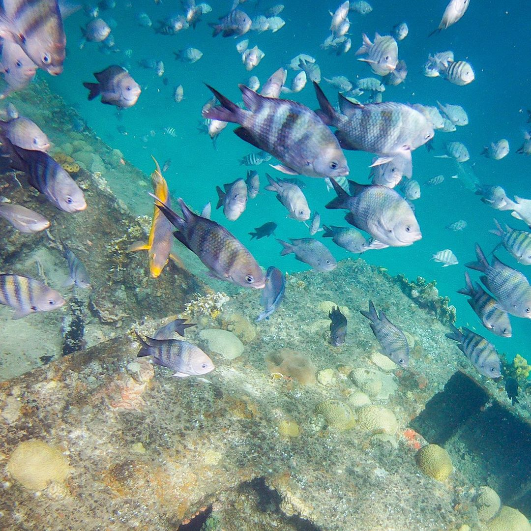 Caribbean First Time Visitors - Fish