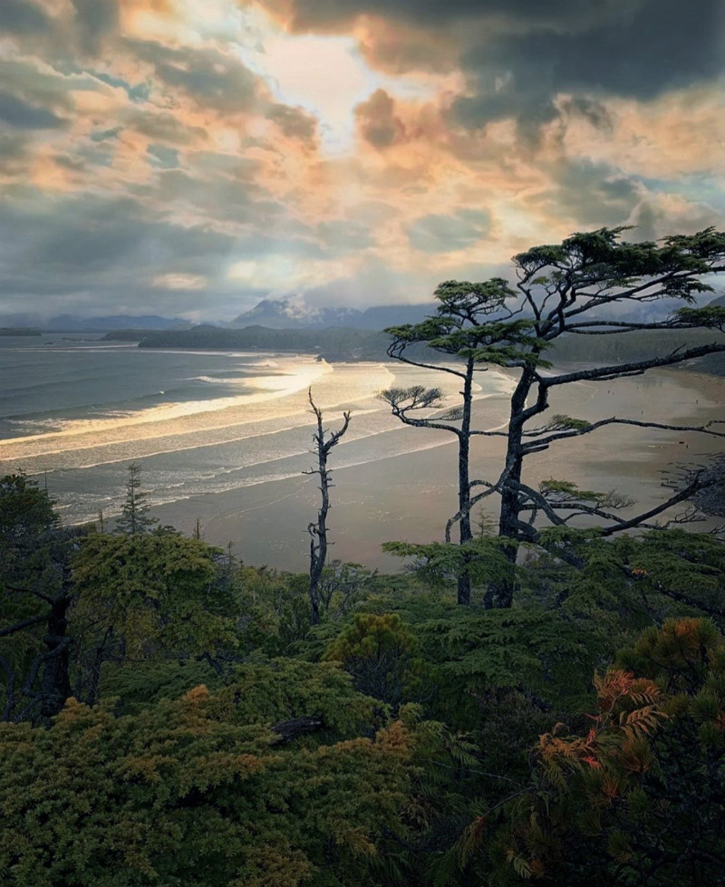Forest Sea