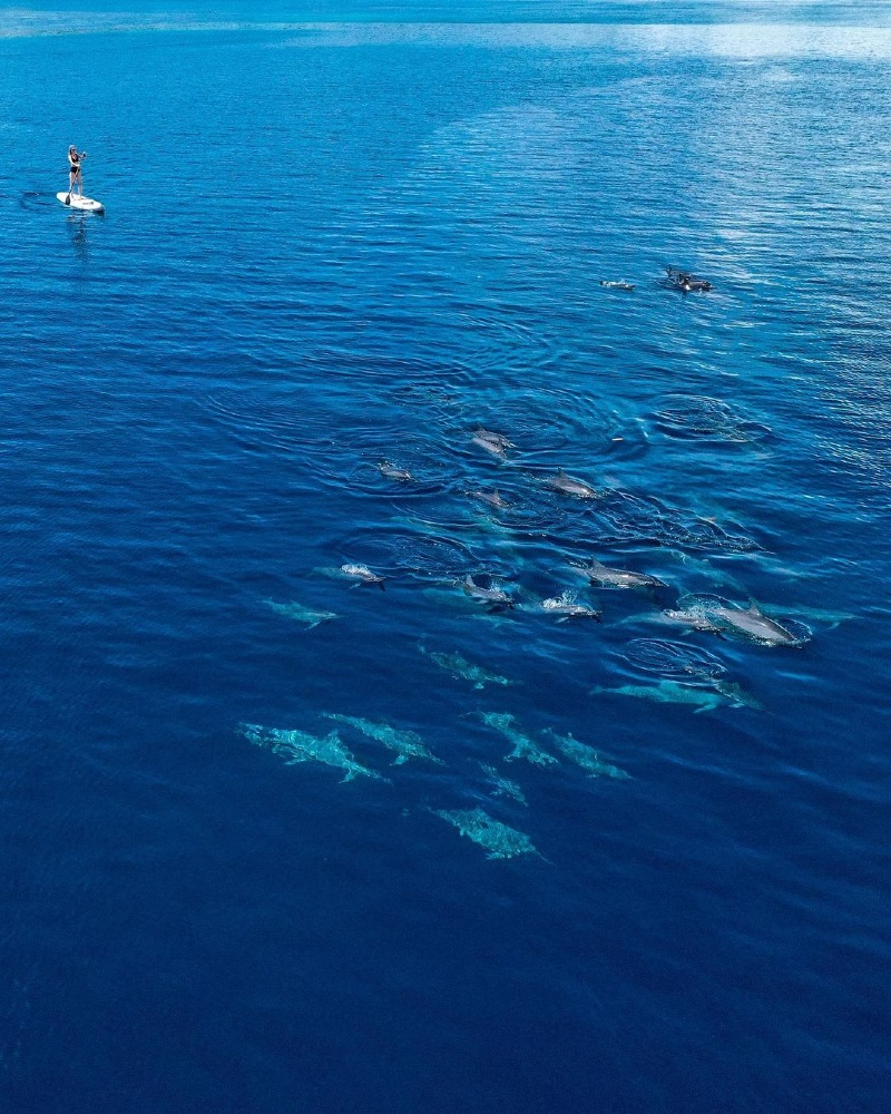 Paddling by Dolphins